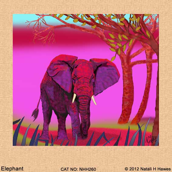 Elephant by Nat H H